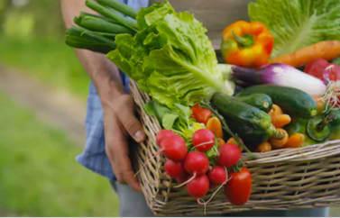 Prezentare a unui cos plin cu legume pentru care se pot accesa fonduri europene pentru agricultura: rosii, ardei, morcovi, ceapa, salata, ridichi, dovlecei, zucchini.