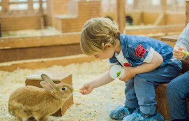 Consultanta fonduri europene Alba pentru infiintarea unei ferme mixte de animale care poate sa contina iepuri, cai, oi, vite, capre, gaini, porci si alte animale.