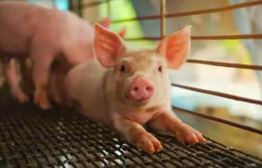 Consultnata fonduri europene nerambursabile Zalau pentru infiintarea unei ferme micte de animale. Un baiat ii da unui iepuras de mancare. Iepursul, precaut din fire nu se apropie prea mult si isi tine urechile ciulite in caz de pericol.